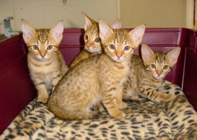 Cats - bilder